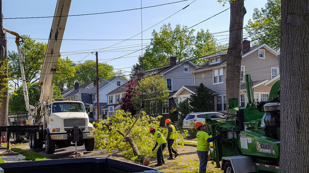 NJ Tree Removal Residential Service