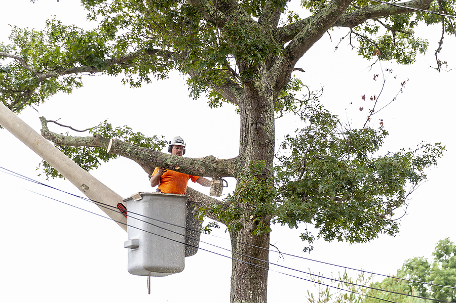 tree pruning service near me