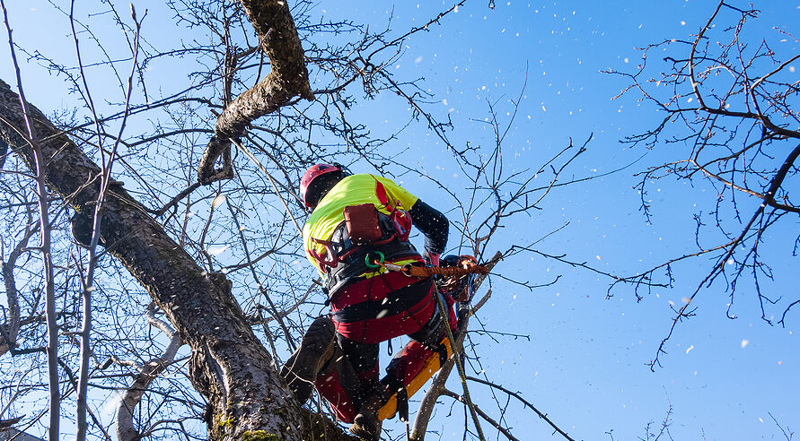 Don't Just Google Tree Trimming Near Me - What You Need to Know