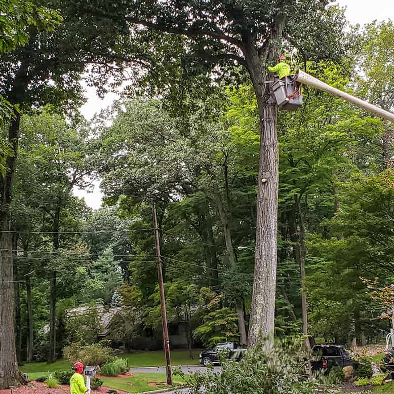 Tree removal and service bregen county NJ