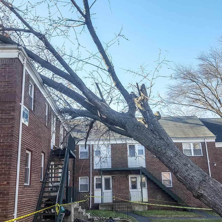 Tree Removal Bergen County Nj