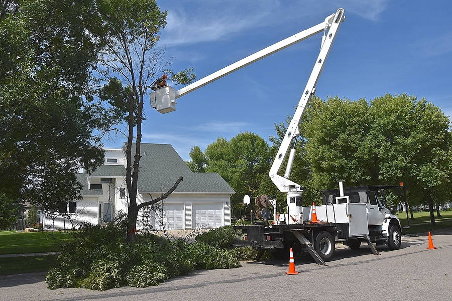 nj tree removal service