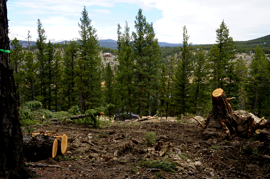Land Clearing Services - Why Hire a Turnkey Contractor