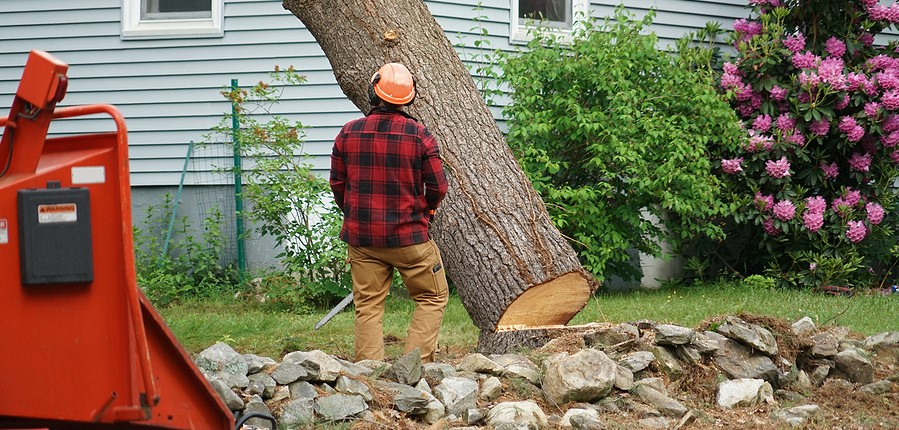 The Average Cost of Tree Removal - Factors to be Considered