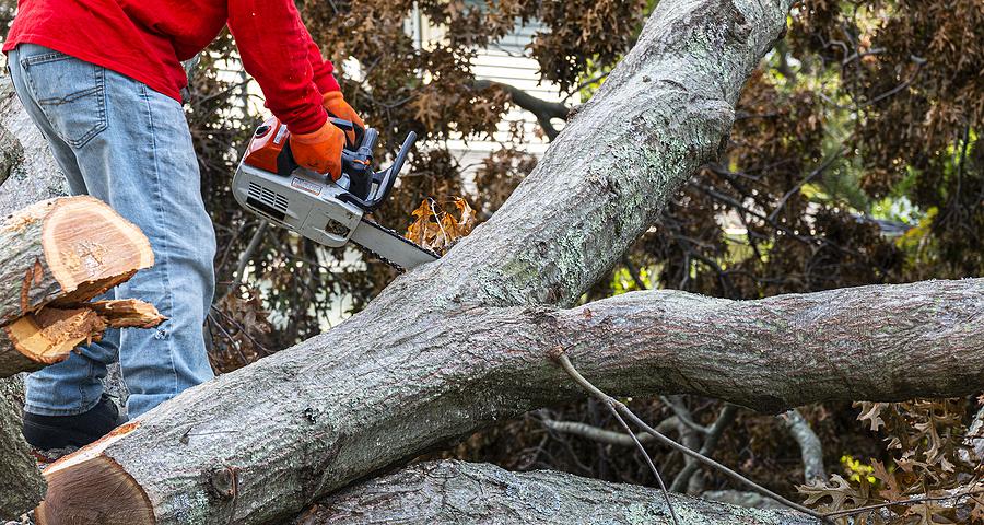 Storm Damage tree removal
