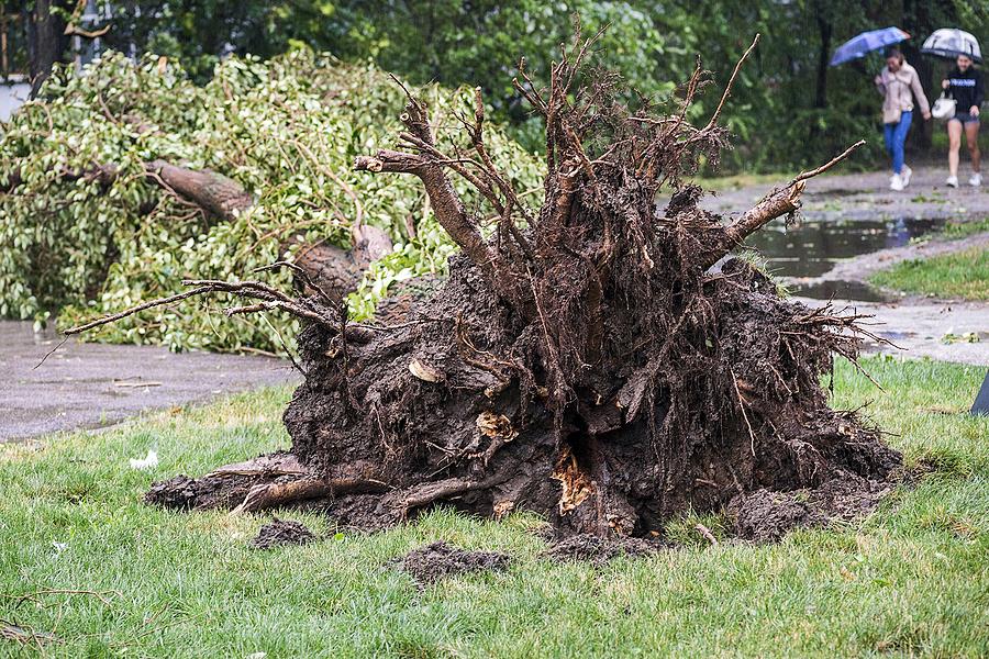 Storm damage tree service