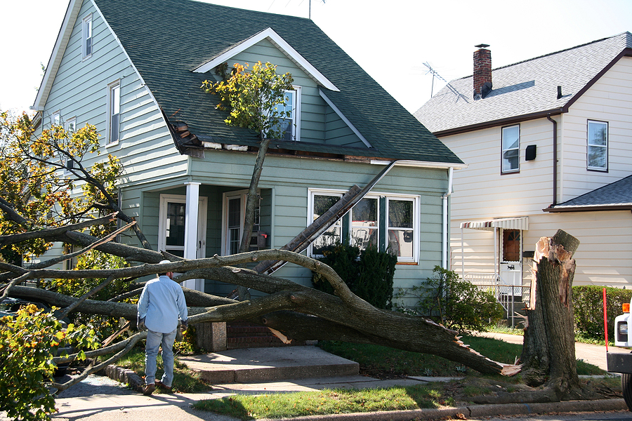 Removing Storm Damaged Trees - It's not a DIY Project