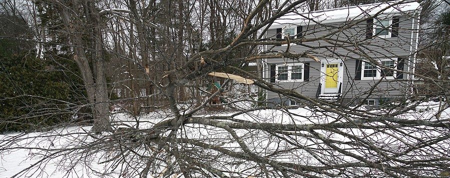 Tree Pruning, Stump and Tree Removal - Why Winter is the Best Time