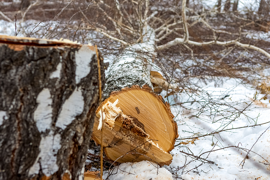 Benefits Of Tree and Land Clearing During Winter