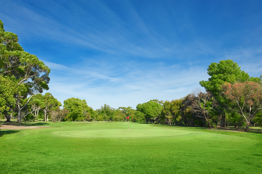 Golf Course Tree Management - Why it's Important