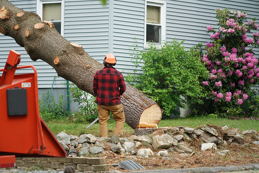 professional tree removal near me