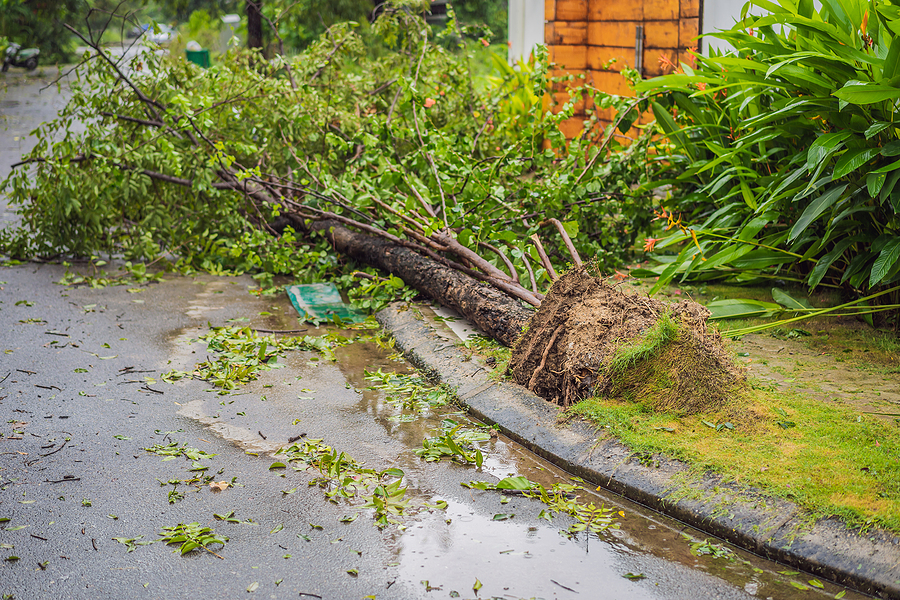 Tree Safety Assessment - Is It Time for Professional Tree Removal?