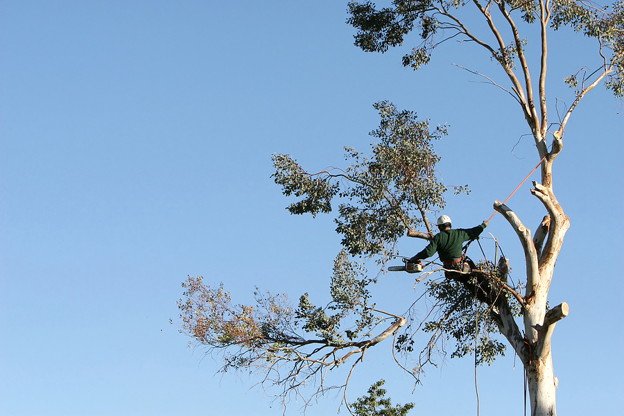 Tree Removal Contractors - Hire Turnkey Service That Does It All