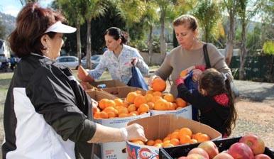 Food Distribution Costa Mesa