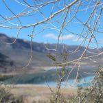 Mono Lake - vista do visitor center