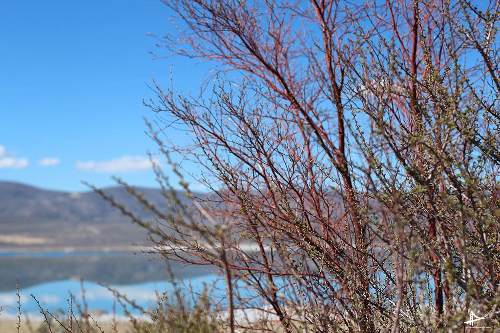 Mono Lake - Paisagem