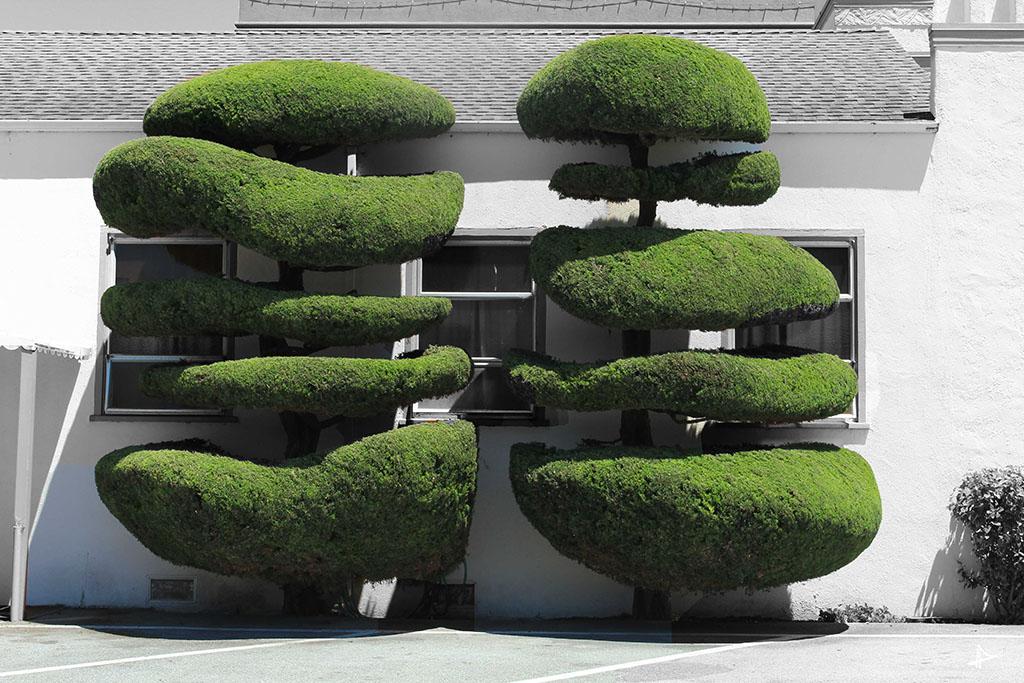 E o que são estas árvores chiquetérrimas?
