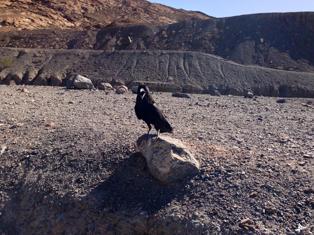Onde comer no Death Valley