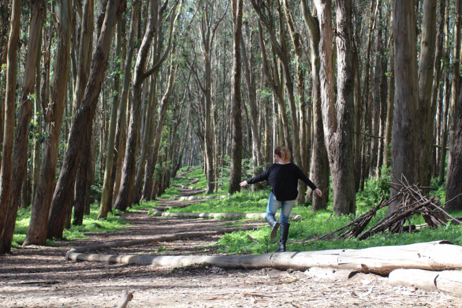 Woodline no Presidio em San Francisco