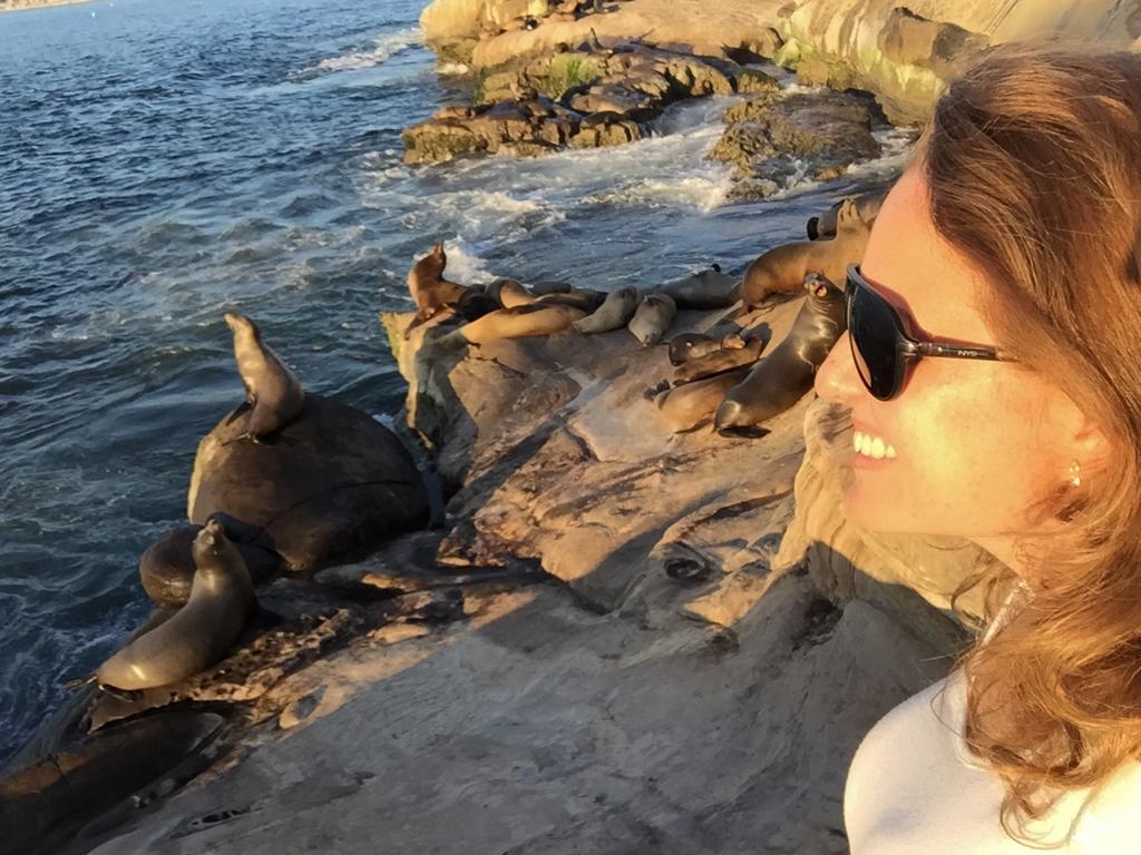 Com os leões marinhos