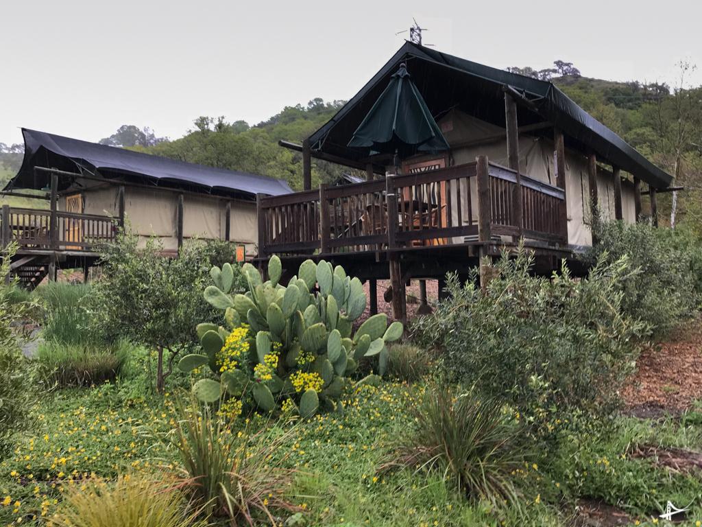 Tour no Safari West em Sonoma
