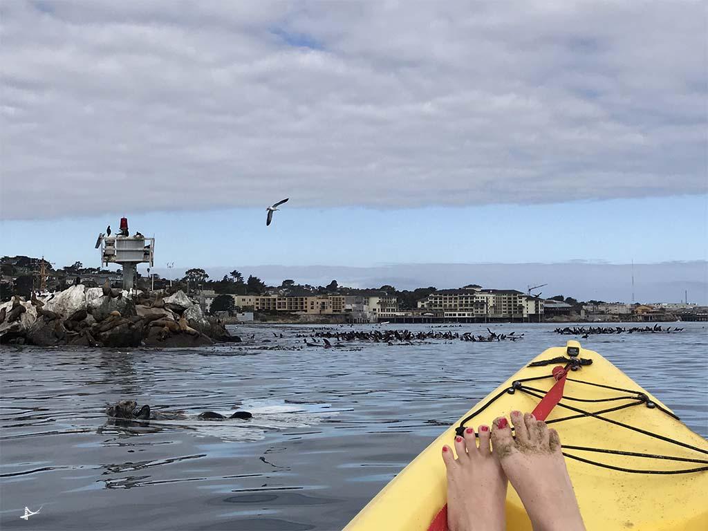 Passeio de caiaque em Monterey
