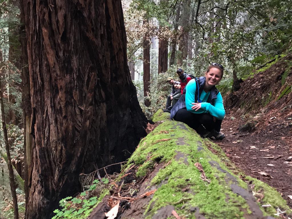 Nas trilhas do Muir Woods