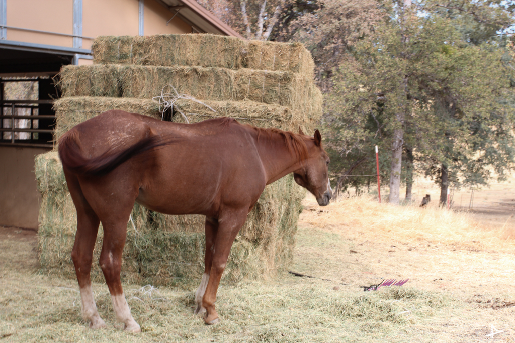 Cavalo no Yosemite Rose