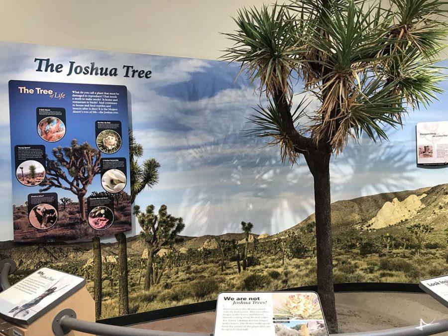 Visitor Center Joshua Tree