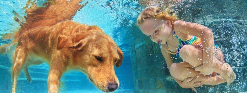 Tips for Keeping Your Dog Safe in Water