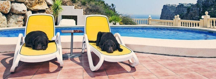Dealing with the Dog Days of Summer