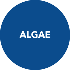 Algae Products