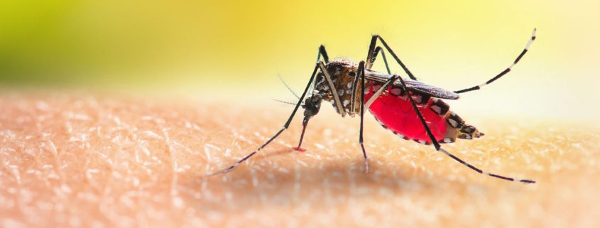 Get a Handle on Mosquitos Before Your Labor Day Party