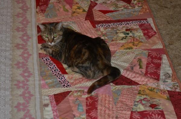 cat wants a quilt