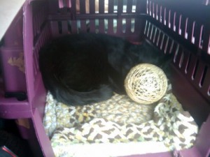 Marlowe with the Basket of Invisibility