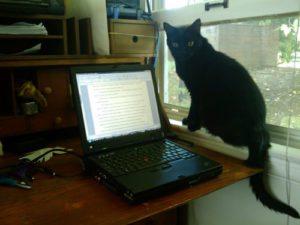 Marlowe by my desk