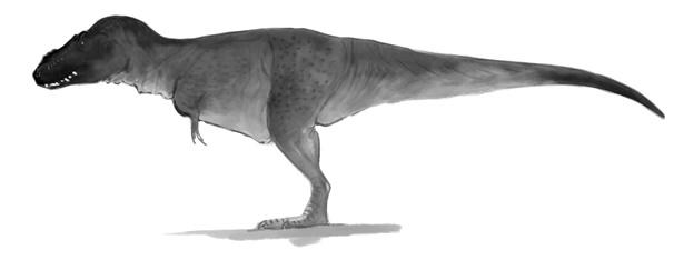 (Tyrannosaurus rex by Daniel M Bensen)
