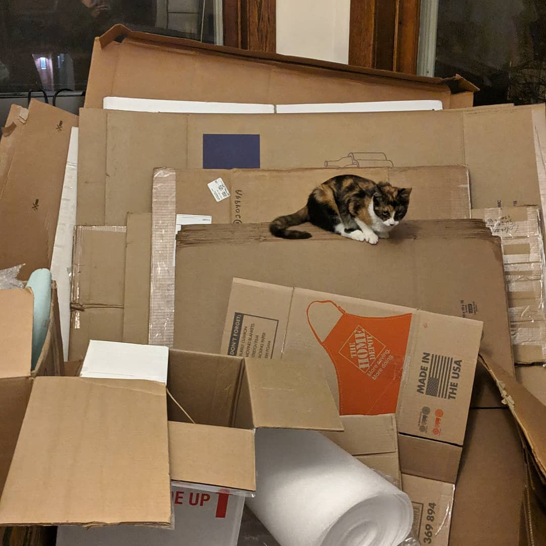 Moving boxes with cat