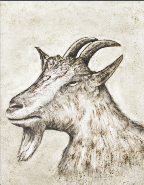 Barnaby the goat by Rhys Davies