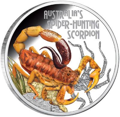spider-hunting-scorpion