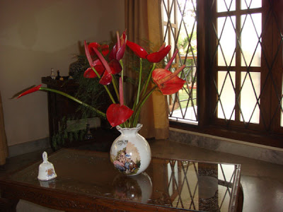 Freshly-cut anthuriums decorated at the living area