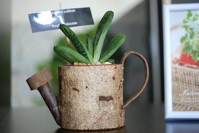 succulent plant on flower water pot