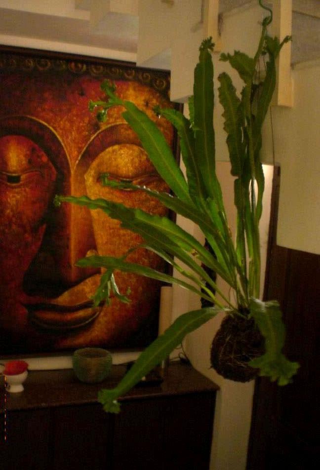 Seema and Rakesh buddha pic home Bangalore home tour