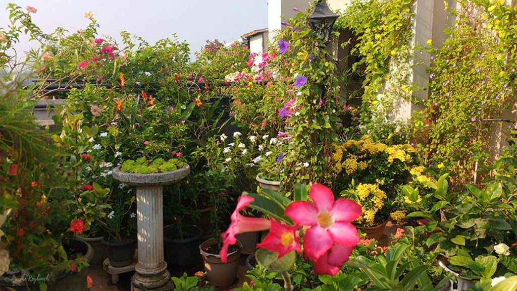 Jayashree Rajan's garden apartment tour on The Keybunch: green garden