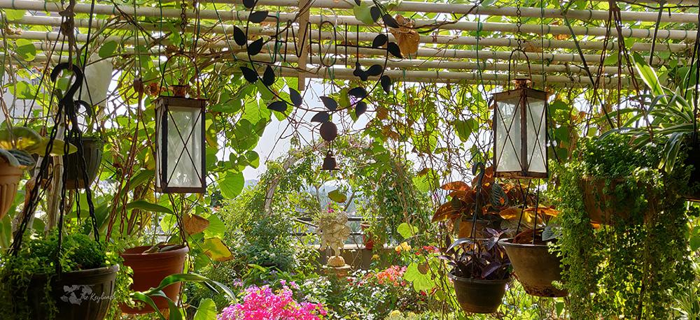 Jayashree Rajan's garden apartment tour on The Keybunch: The pergola garden