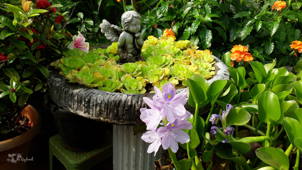 Jayashree Rajan's garden apartment tour on The Keybunch: The charming cherub in green garden