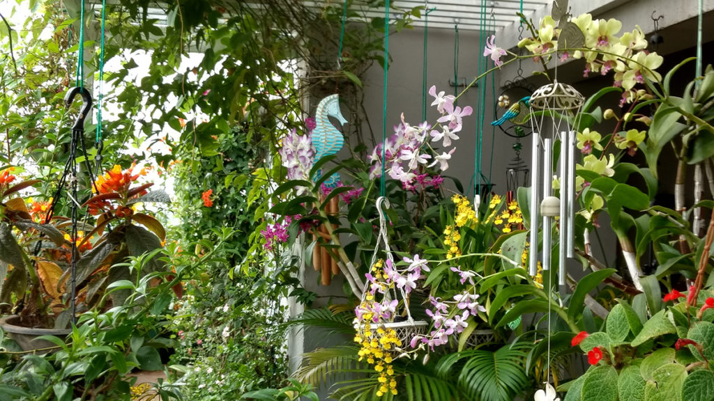 Jayashree Rajan's garden apartment tour on The Keybunch: orchid flower blooming in the pergola