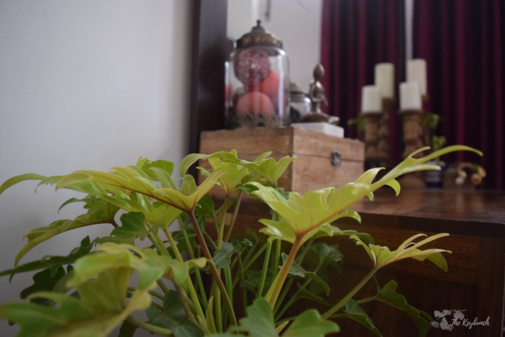 Home decor Tour by Ankita and Sitanshu's in Lucknow - indoor green plants at bedroom