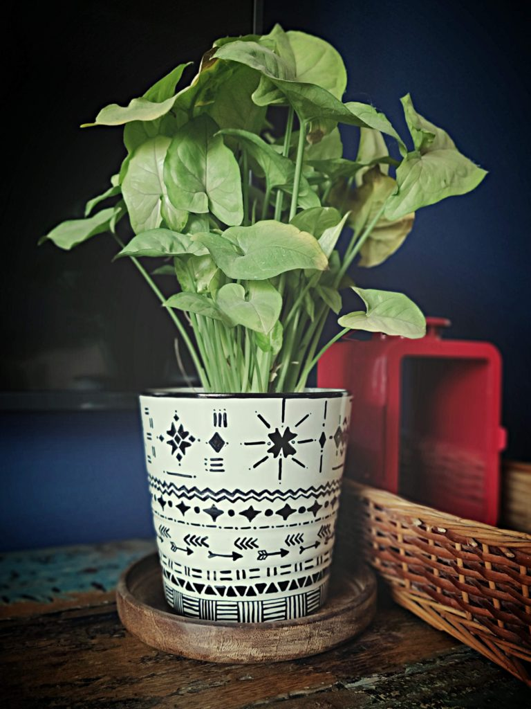 Home style Tour with Rajni in Hyderabad: green plants on a plain white vase