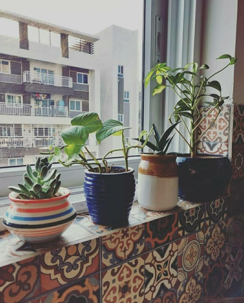 Home style Tour with Rajni in Hyderabad: the beautiful plant babies on the kitchedn window sill, soaking in sun